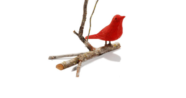 Red Bird Branch 1