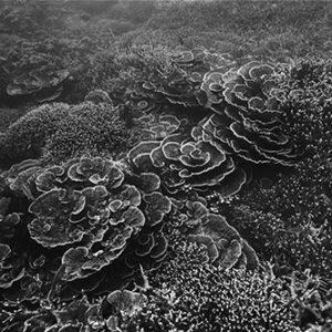 Tioman Seascape (O-14)